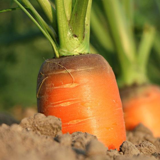 Crema dolce di carote, arancia e cannella