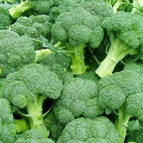 Pasta e broccoli (Calabria)