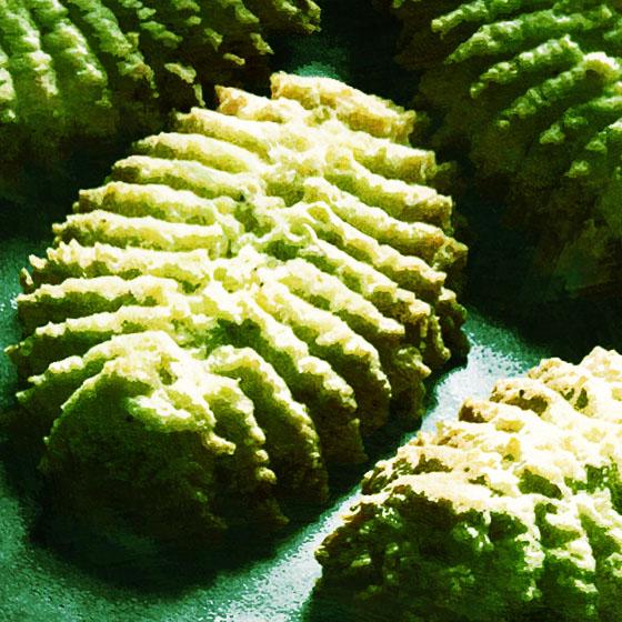 Biscotti al pistacchio per sparabiscotti